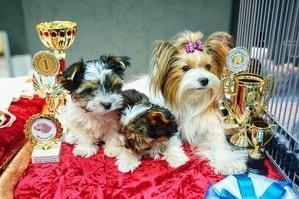 Маленькие победители